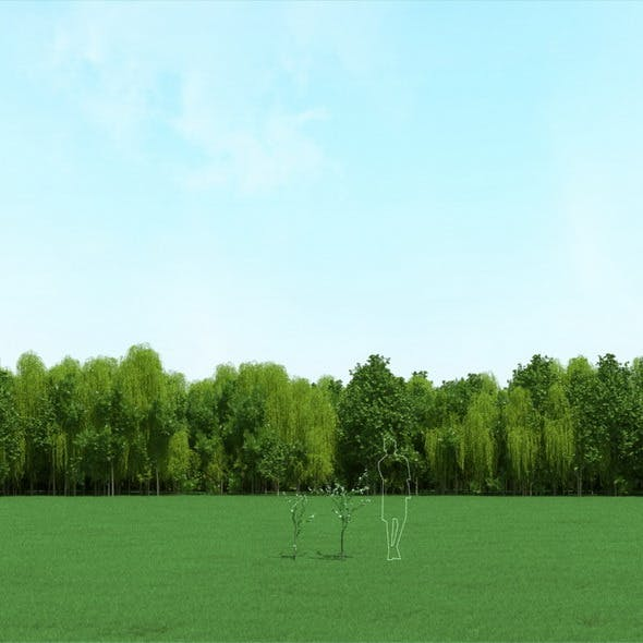 Blooming Cherry Trees (Prunus Cerasus) 3d Models - 3DOcean Item for Sale