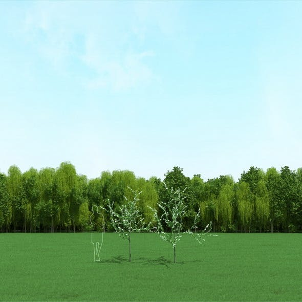Blooming Cherry Tree 3d Models