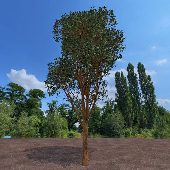 High detailed tree - 3DOcean Item for Sale