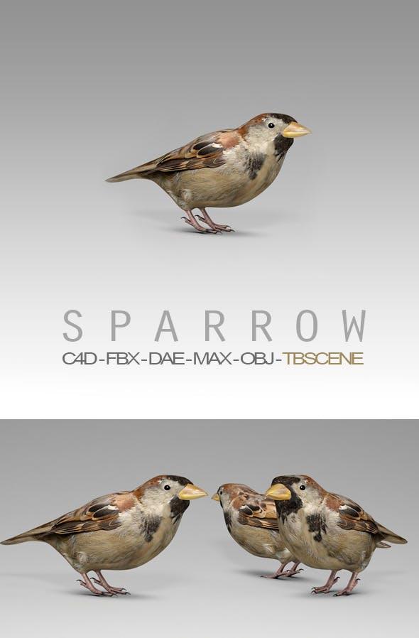 Simple House Sparrow Bird - 3DOcean Item for Sale