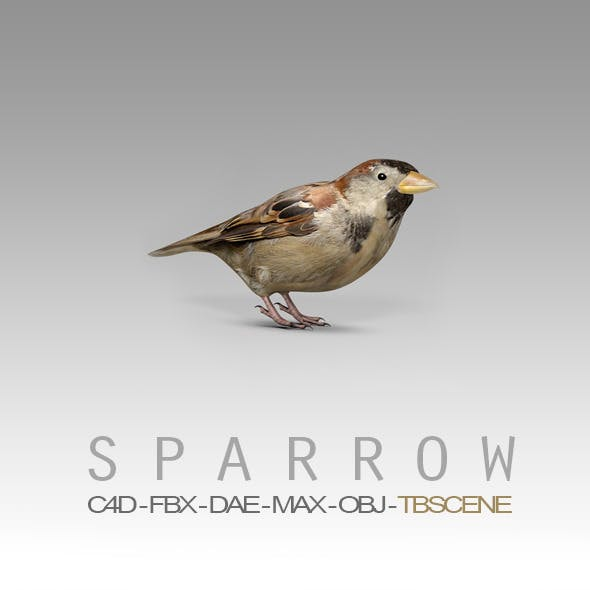 Simple House Sparrow Bird