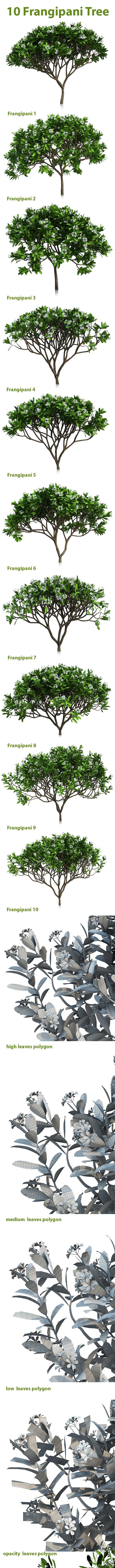 10 Frangipani Tree - 3DOcean Item for Sale