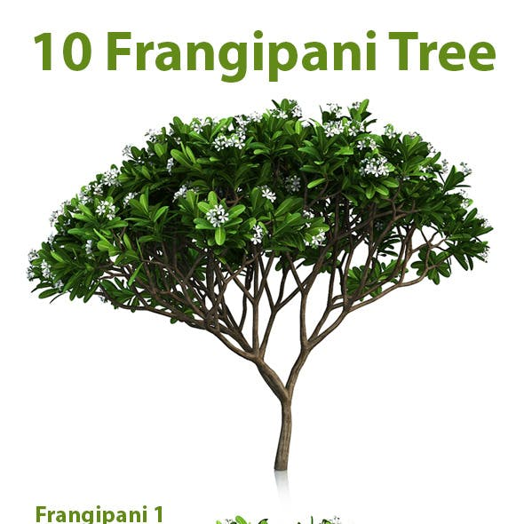 10 Frangipani Tree