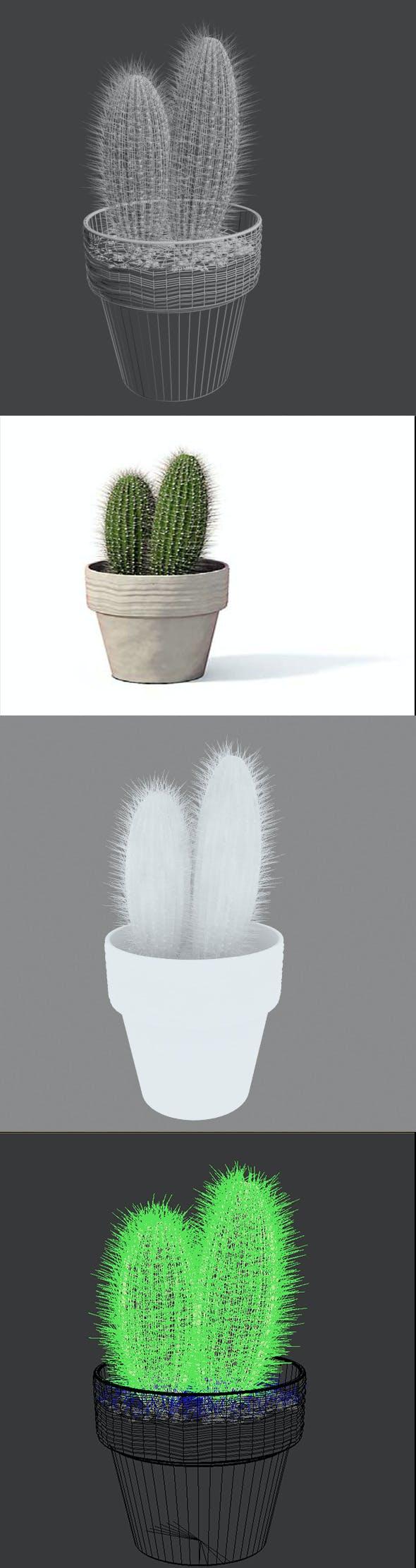 3D Cactus pot plant model - 3DOcean Item for Sale