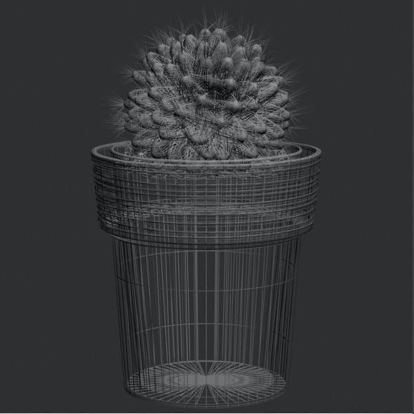 3D Cactus pot plant model 2