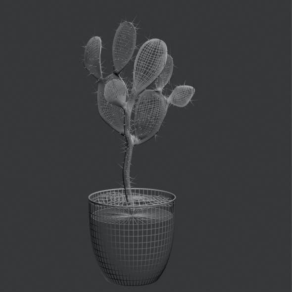 3D Cactus pot plant model 3