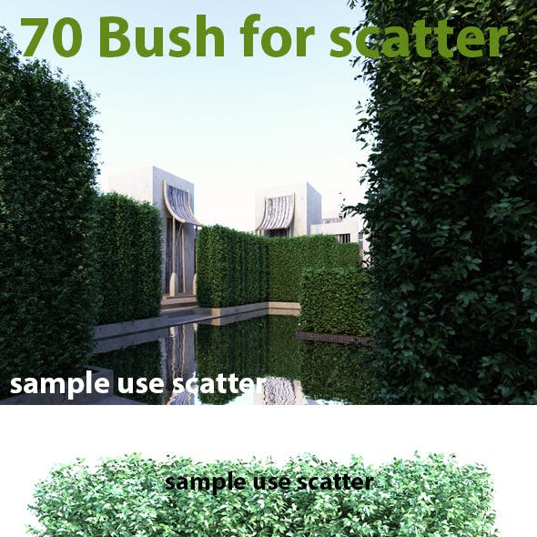70 Bush For Scatter