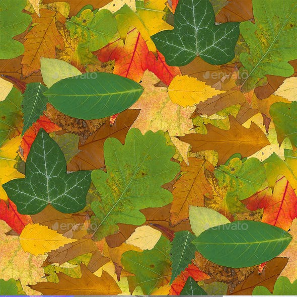 Fall Seamless Texture