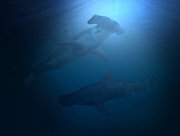 Hammer Head Shark - 3DOcean Item for Sale