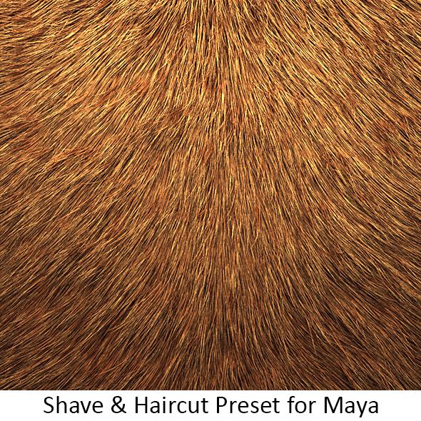 Shave Animal Fur2 - 3DOcean Item for Sale