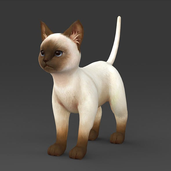 White Brown Kitten