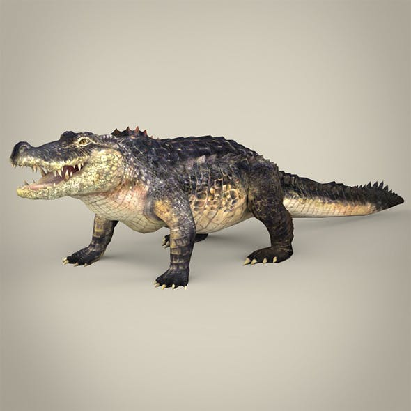 Realistic Crocodile - 3DOcean Item for Sale