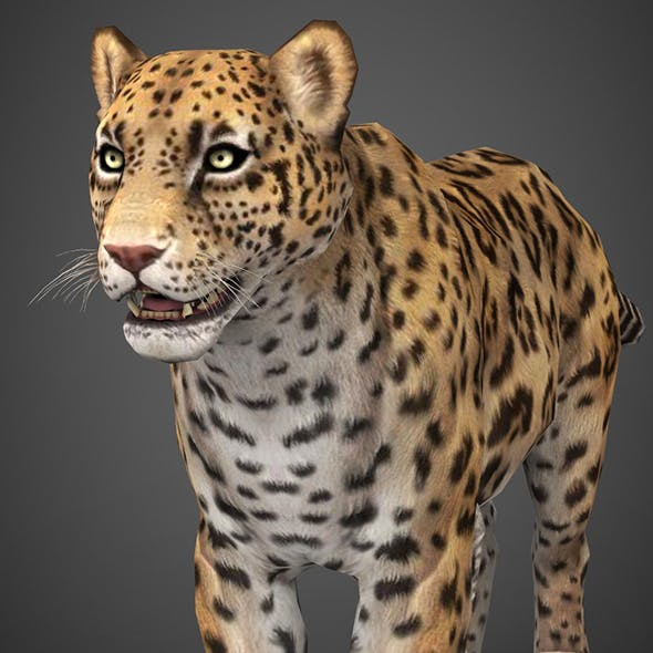 Realistic Game Ready 3D Cheetah