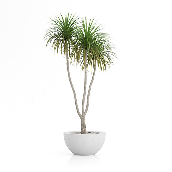 Potted Palm Tree - 3DOcean Item for Sale