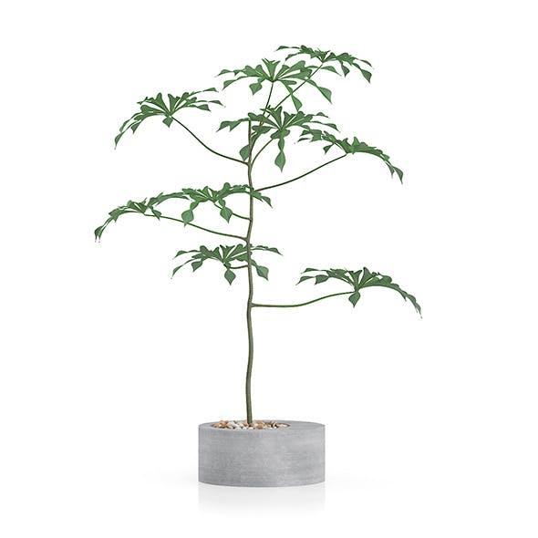 Plant in Concrete Pot - 3DOcean Item for Sale