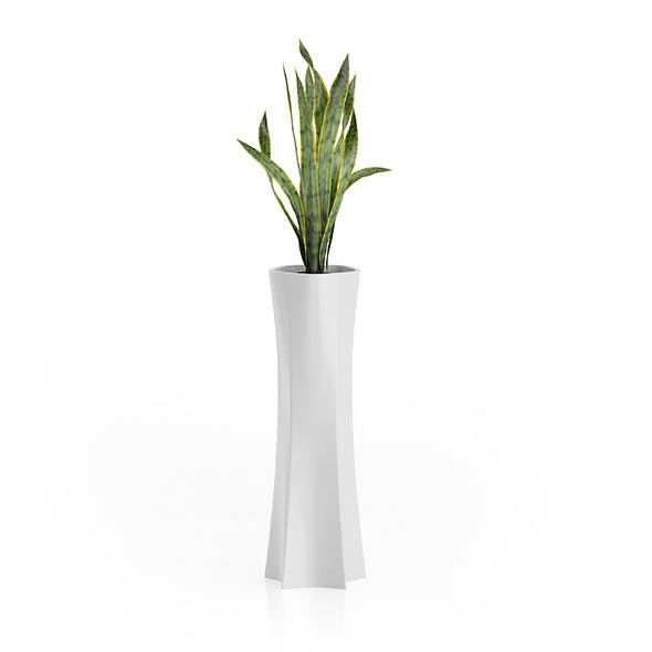 Snake Plant in Tall Pot - 3DOcean Item for Sale