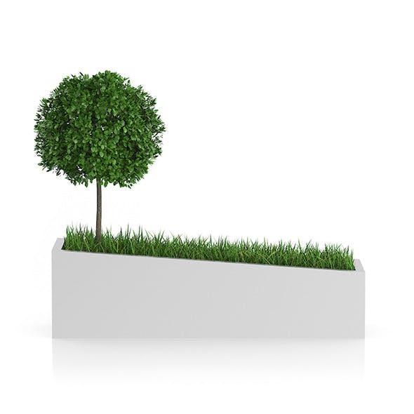 Tree an Grass in Rectangular Planter