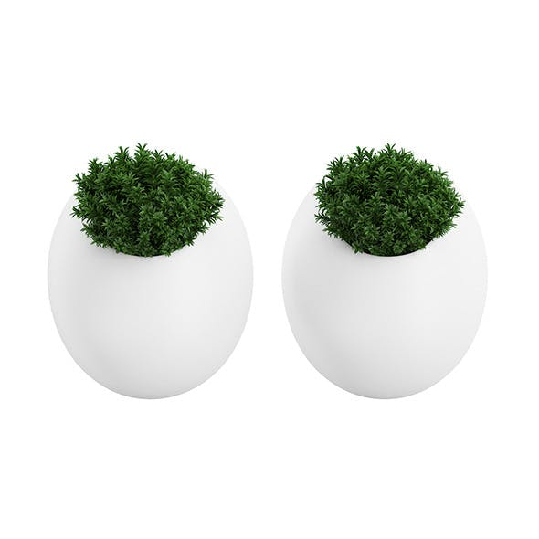 Two Small Wall Plants - 3DOcean Item for Sale