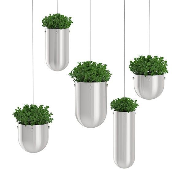 Plants in Metal Hanging Pots