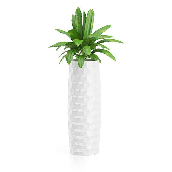 Plant in Tall White Pot