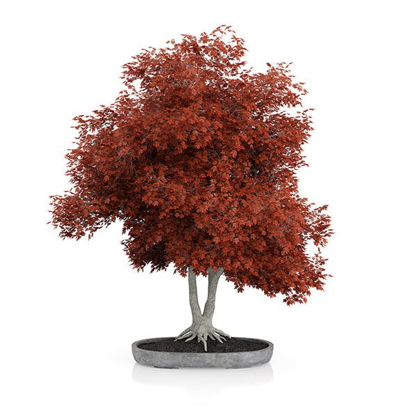 Red Bonsai Tree - 3DOcean Item for Sale