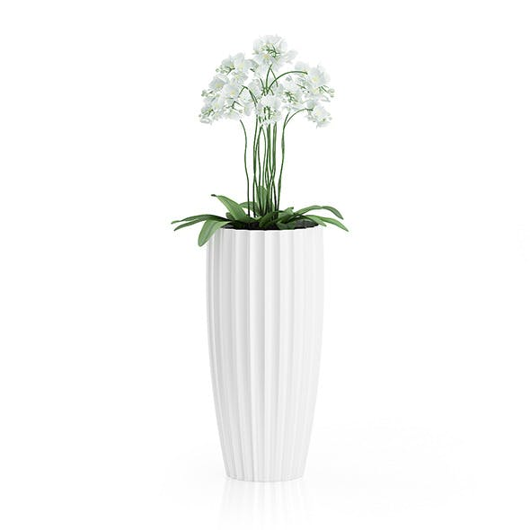 Orchid Flowers in Tall Pot - 3DOcean Item for Sale
