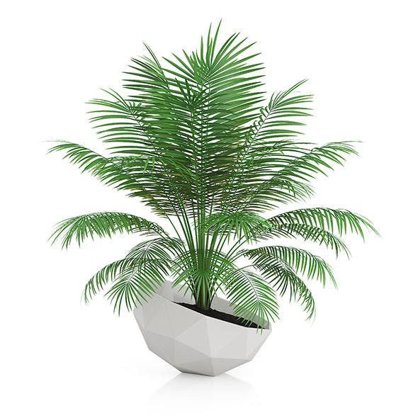 Palm Tree in Modern Pot - 3DOcean Item for Sale