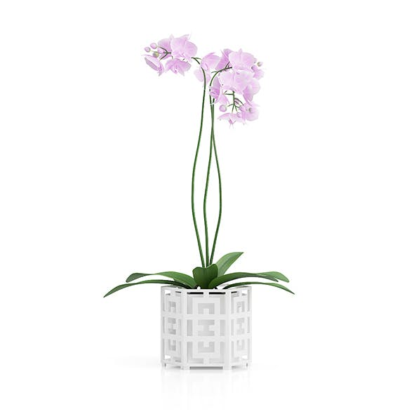 Orchid Flower in Hexagonal Pot