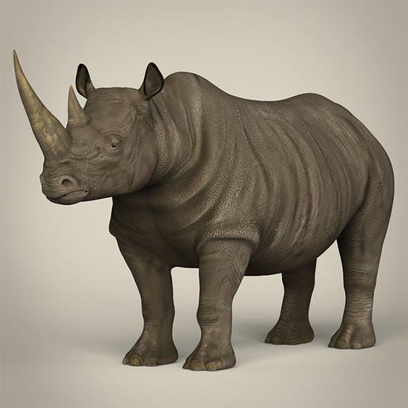 Realistic Rhinoceros