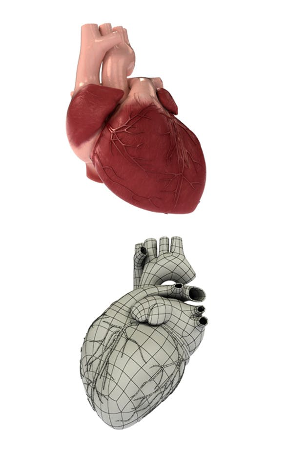 Detailed 3D Human Heart - 3DOcean Item for Sale