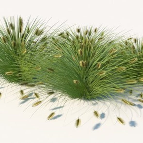 Lowest Poly- Fountain Grass
