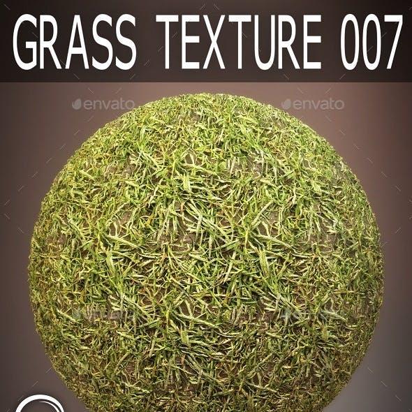Grass Textures 007