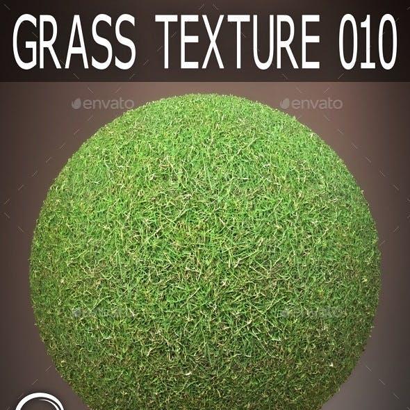 Grass Textures 010