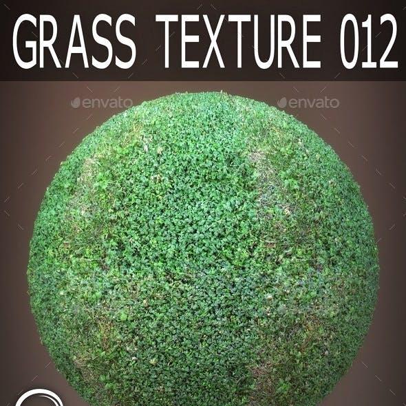 Grass Textures 012