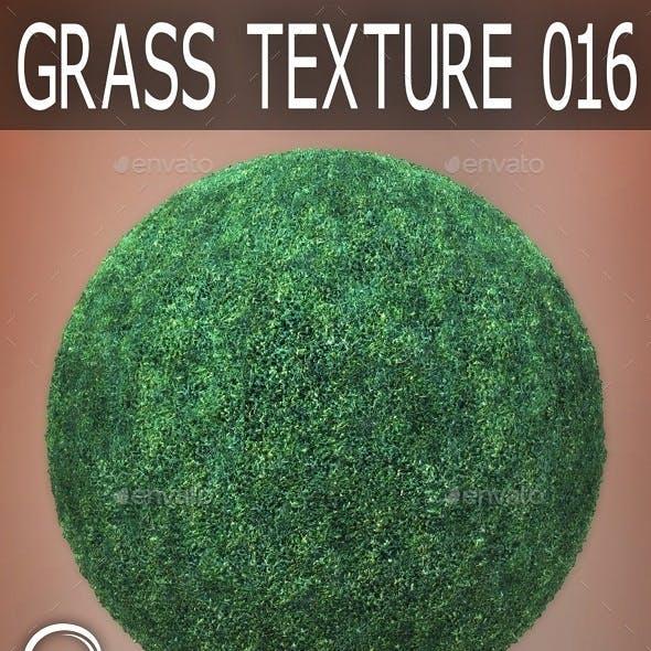 Grass Textures 016