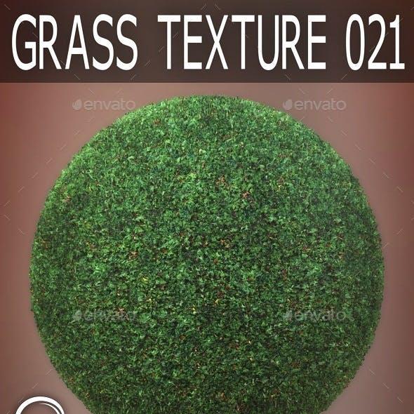 Grass Textures 021