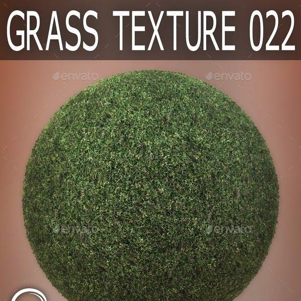 Grass Textures 022