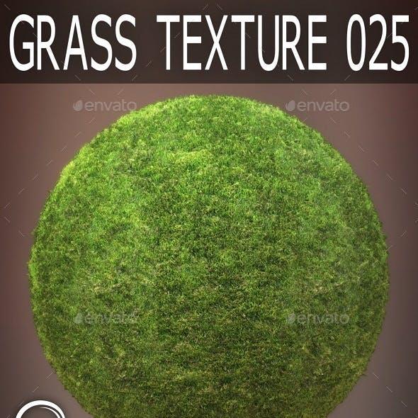 Grass Textures 025