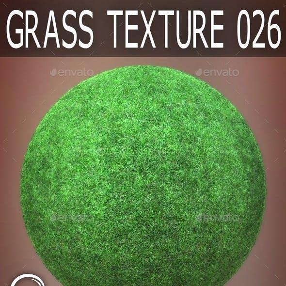 Grass Textures 026
