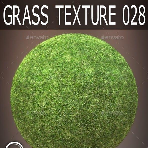 Grass Textures 028