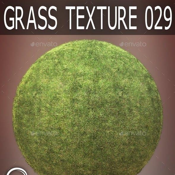 Grass Textures 029