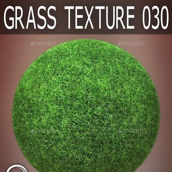 Grass Textures 030