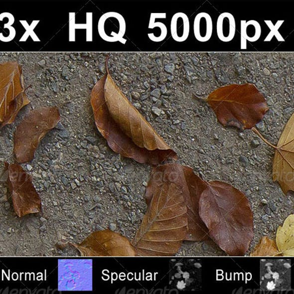 3x Autumn Leaves on Road 1