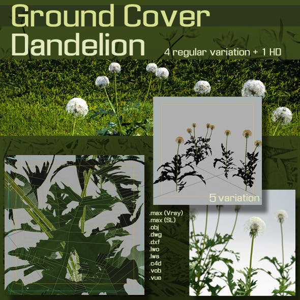 Ground Cover :  Dandelion
