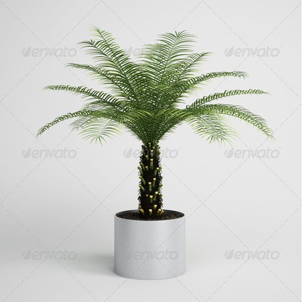 CGAxis Palm Tree in Planter 10