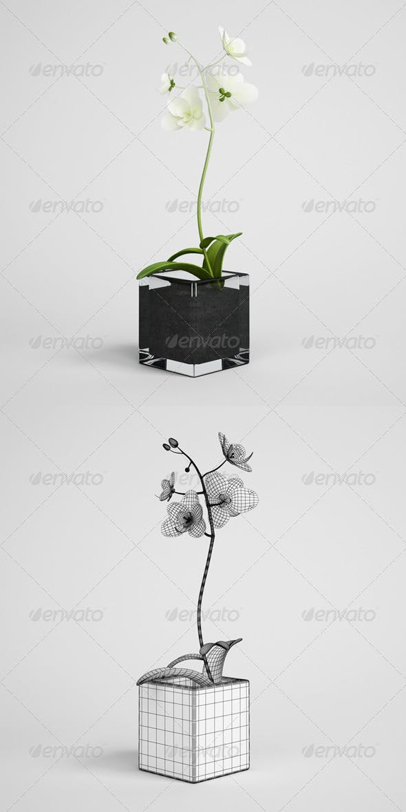 CGAxis Potted Orchid Plant 14 - 3DOcean Item for Sale