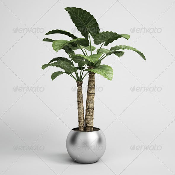 CGAxis Potted Houseplant 15