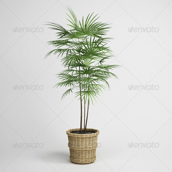 CGAxis Potted Palm Tree 16