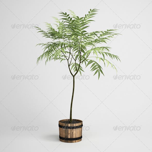 CGAxis Potted Tree 19