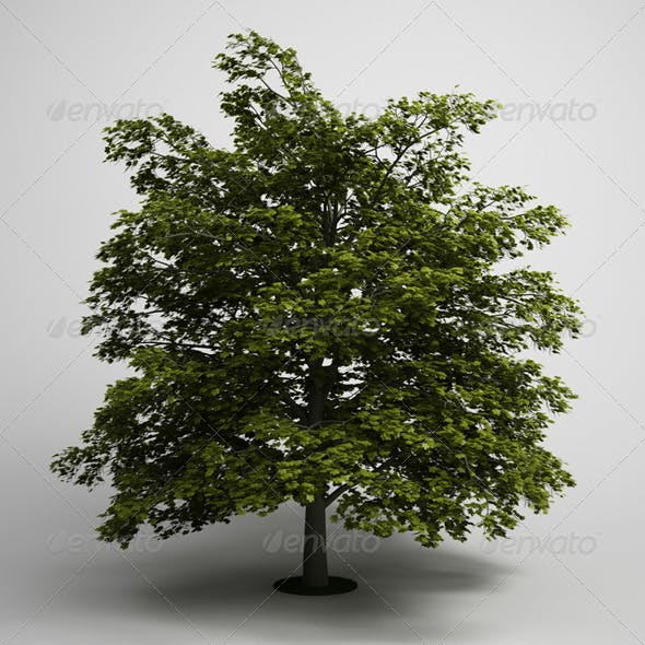 CGAxis Tree Norway Maple 03